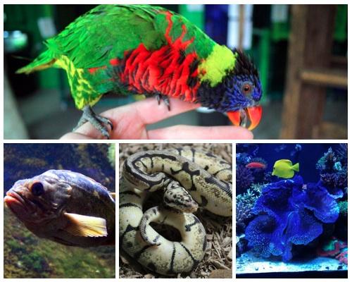 Join Us For A Play Date At Austin Aquarium Austin Moms Blog