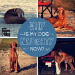 Going from Dog Lover to Loather