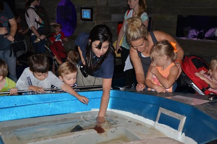 An Austin Aquarium Playdate Recap
