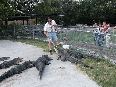 Photo Courtesy of Animal World & Snake Farm Zoo