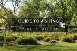 austin-moms-blog-urban-farms