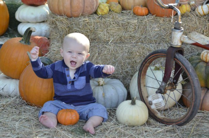 Austin and Central Texas Pumpkin Patches | Austin Moms Blog