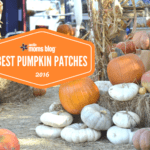 Austin and Central Texas Pumpkin Patches