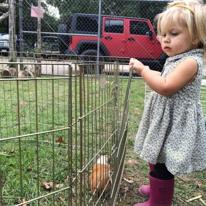petting animals around Austin