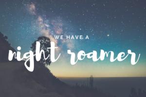 AMB-we have a night roamer