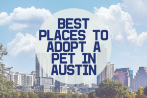 AMB-Best Places to Adopt Pets in Austin
