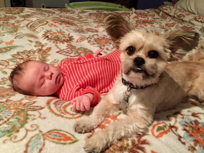 dog and baby laying on bed
