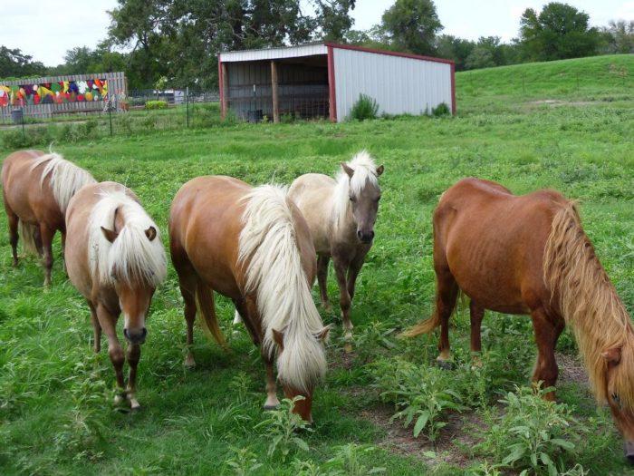 horses at Crowe's Nest Farm