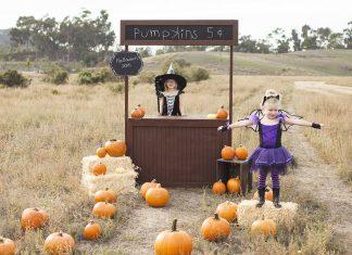 best pumpkin patches around Austin