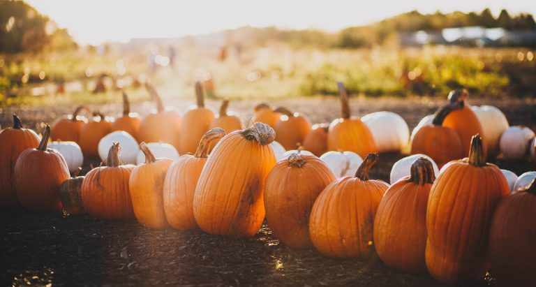 Best Pumpkin Patches in and Around the Austin Area